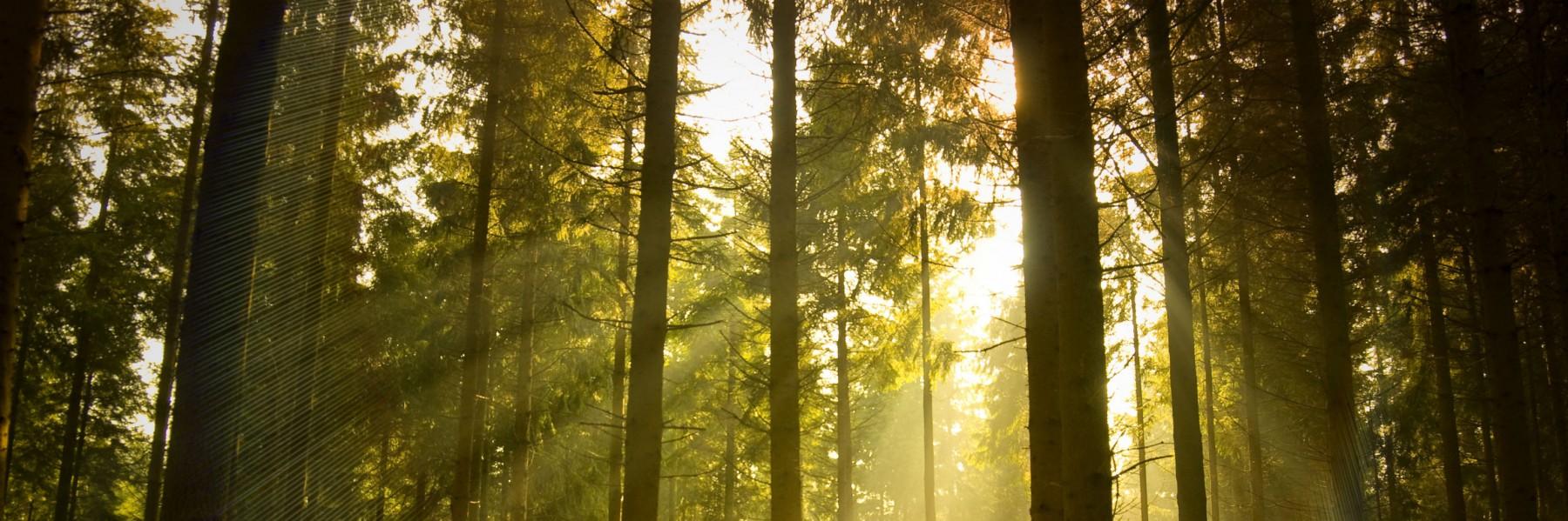 Green Forest Wellness Center